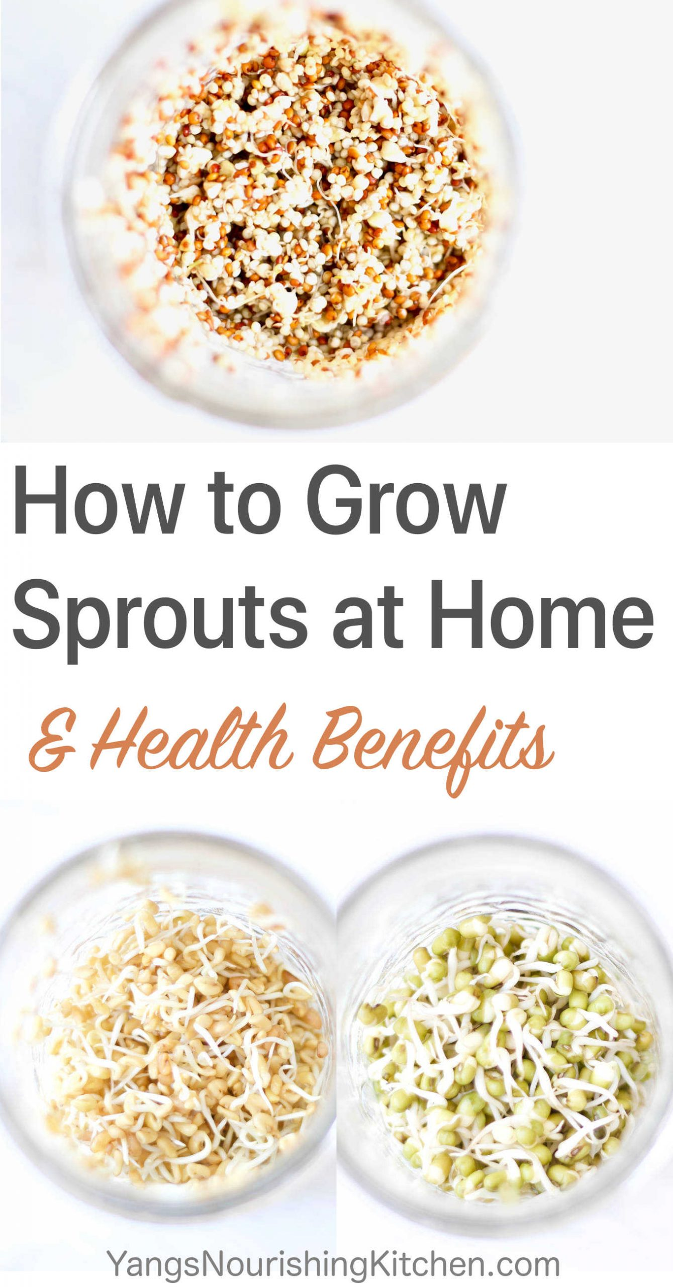 How to Grow Sprouts + Health Benefits