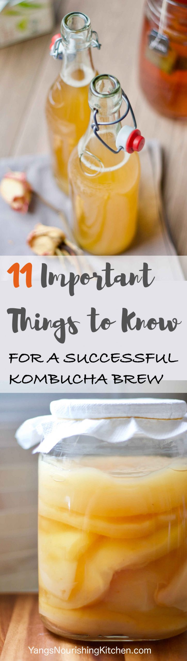 11 Important Things To Know for a Successful Kombucha Brew